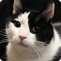 Adopt A Pet :: Squeakers - Sacramento, CA