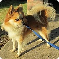 Adopt A Pet :: Lenny - Dallas, TX