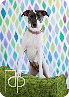 Terrier (Unknown Type, Medium) Mix Dog for adoption in Vandalia, Illinois - Jasmine