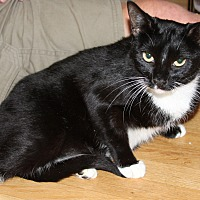 Adopt A Pet :: Meep - Torrance, CA