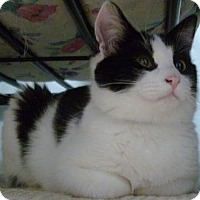 Adopt A Pet :: Myrtle - Vancouver, WA