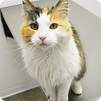 Adopt A Pet :: Haley - Springfield, IL