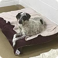 Adopt A Pet :: S/C Precious - Miami, FL