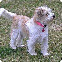 Adopt A Pet :: Rika - Upper Marlboro, MD