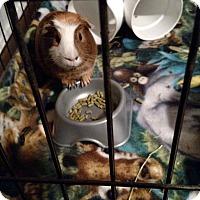 Adopt A Pet :: Malay&Fiji (COURTESY POST) - Baltimore, MD