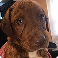 Adopt A Pet :: Copper - Valley Stream, NY