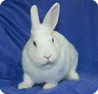 Other/Unknown Mix for adoption in Los Angeles, California - Bluebelle