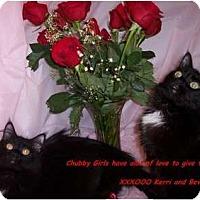 Adopt A Pet :: Beverly - Harrisburg, NC