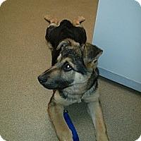 Adopt A Pet :: Angel - Wallaceburg, ON
