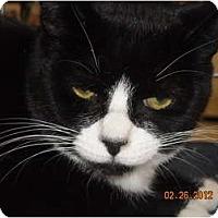 Adopt A Pet :: Madison - Riverside, RI