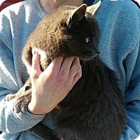 Adopt A Pet :: Elsa - Armuchee, GA