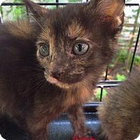 Adopt A Pet :: Rainy - Brooklyn, NY