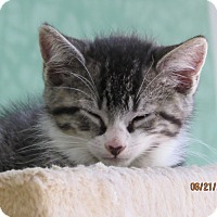 Adopt A Pet :: Dave and Oliver - Southington, CT