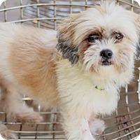 Adopt A Pet :: Imelda - MEET HER - Norwalk, CT