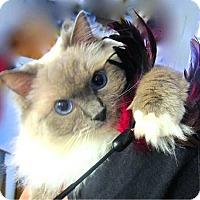 Adopt A Pet :: Gabriella - Davis, CA