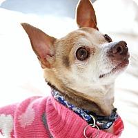 Adopt A Pet :: Pinky - Seattle, WA