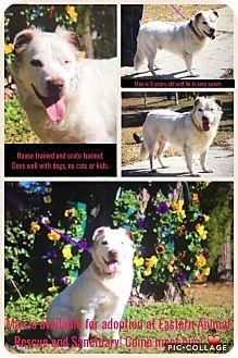Australian Shepherd Mix Dog for adoption in Atlantic, North Carolina - Max