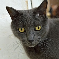 Adopt A Pet :: Isis - Middletown, NY