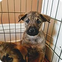 Adopt A Pet :: Rocky - Chicago, IL
