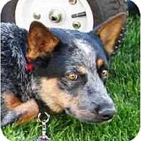 Adopt A Pet :: Madison - Phoenix, AZ