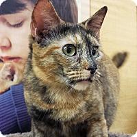 Adopt A Pet :: Thetis - Irvine, CA