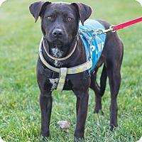Adopt A Pet :: Jessie - Millersville, MD