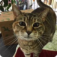 Adopt A Pet :: Lila - Medina, OH