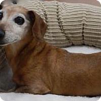Adopt A Pet :: Quinn - Louisville, CO