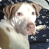 Adopt A Pet :: Luna - Pompano Beach, FL
