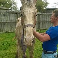 Adopt A Pet :: Austin - Hitchcock, TX