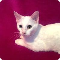 Adopt A Pet :: Pearl - Nolensville, TN