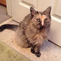 Adopt A Pet :: Agnes - St. Louis, MO