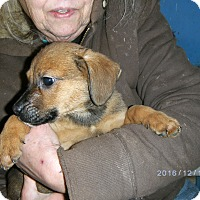 Adopt A Pet :: Ezra - Evensville, TN