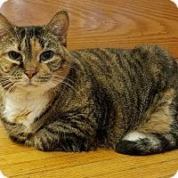 Adopt A Pet :: Mishka - Elyria, OH