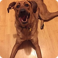 Adopt A Pet :: Penny in CT - Manchester, CT