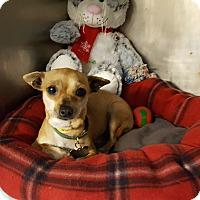 Adopt A Pet :: Alsatia - Middletown, NY