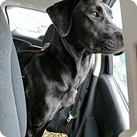 Adopt A Pet :: Abigail - Providence, RI