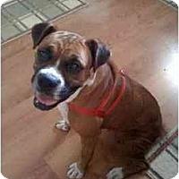 Adopt A Pet :: Jenna - Albany, GA