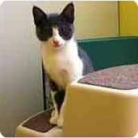 Adopt A Pet :: Dolly - Davis, CA