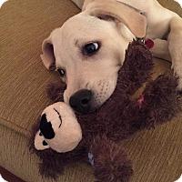 Adopt A Pet :: Joni ~ Adoption Pending - Youngstown, OH