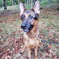 Adopt A Pet :: Titus - Louisville, KY