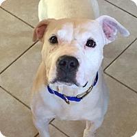 Adopt A Pet :: Barley - Dayton, OH