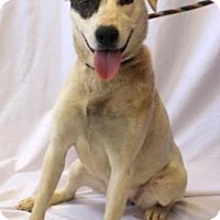 Adopt A Pet :: Corky - North Brunswick, NJ