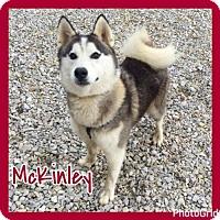 Adopt A Pet :: McKinley - Jasper, IN
