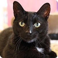 Adopt A Pet :: Edgar - Pacific Grove, CA