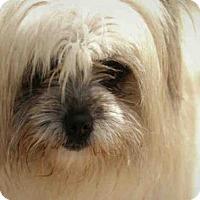 Adopt A Pet :: DARLA - Lacombe, LA