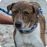 Adopt A Pet :: Mama Brandi - Decatur, GA