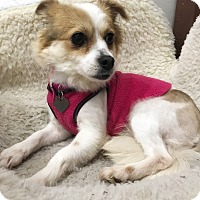 Adopt A Pet :: Cassie - Sherman Oaks, CA