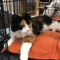 Adopt A Pet :: Lexi - Leonardtown, MD