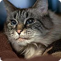 Adopt A Pet :: Sweetie - bloomfield, NJ